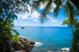 Green Palm Trees on Beach Shore Under Blue and White Sunny Cloudy Sky · Free Stock Photo