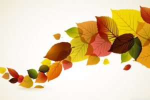 autumn_leaves_background-wallpaper-1920x1080