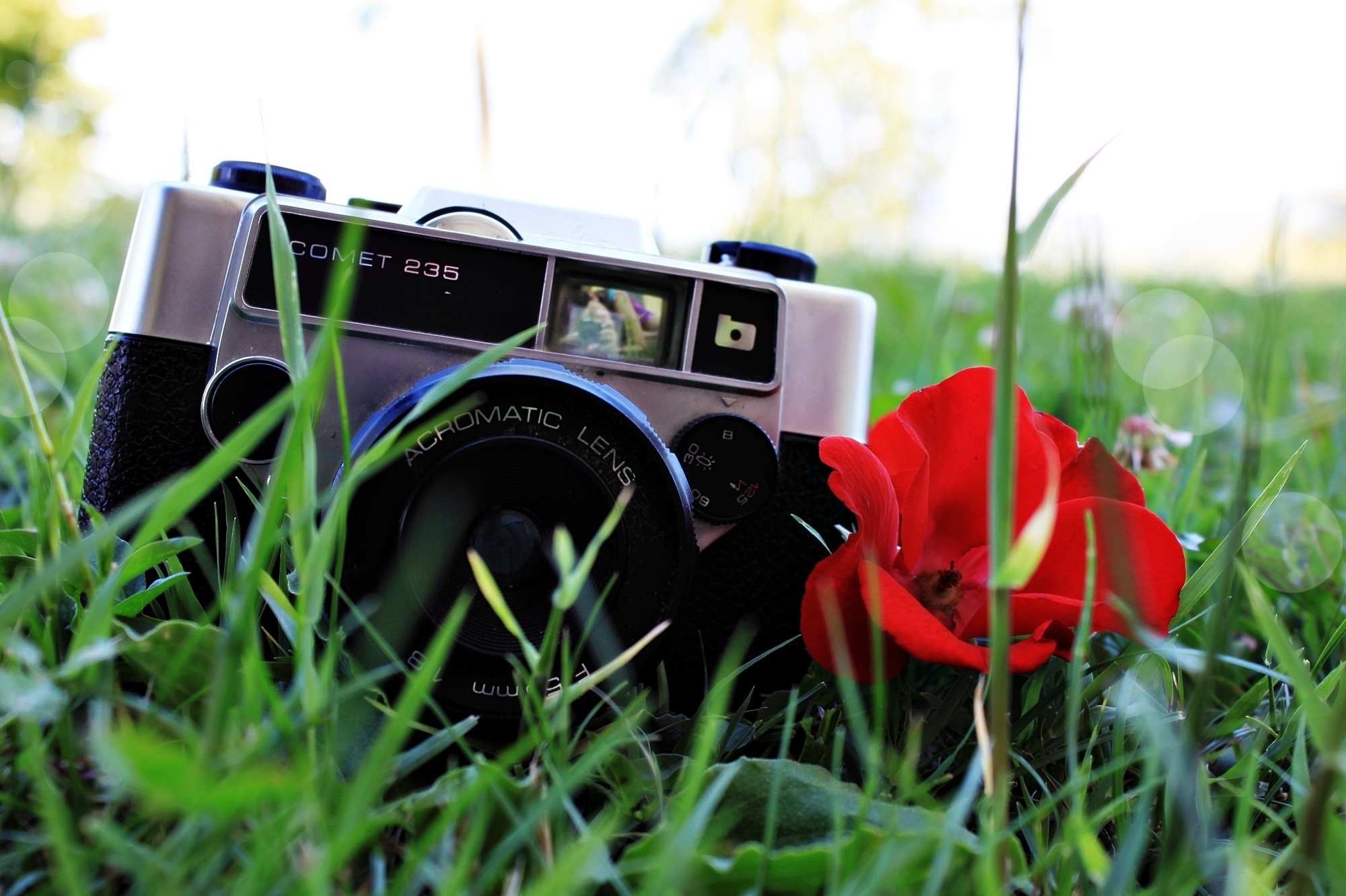 background_poppy_seeds_grass_camera_plant_flower_red_mood_lens_90572_2000x1333