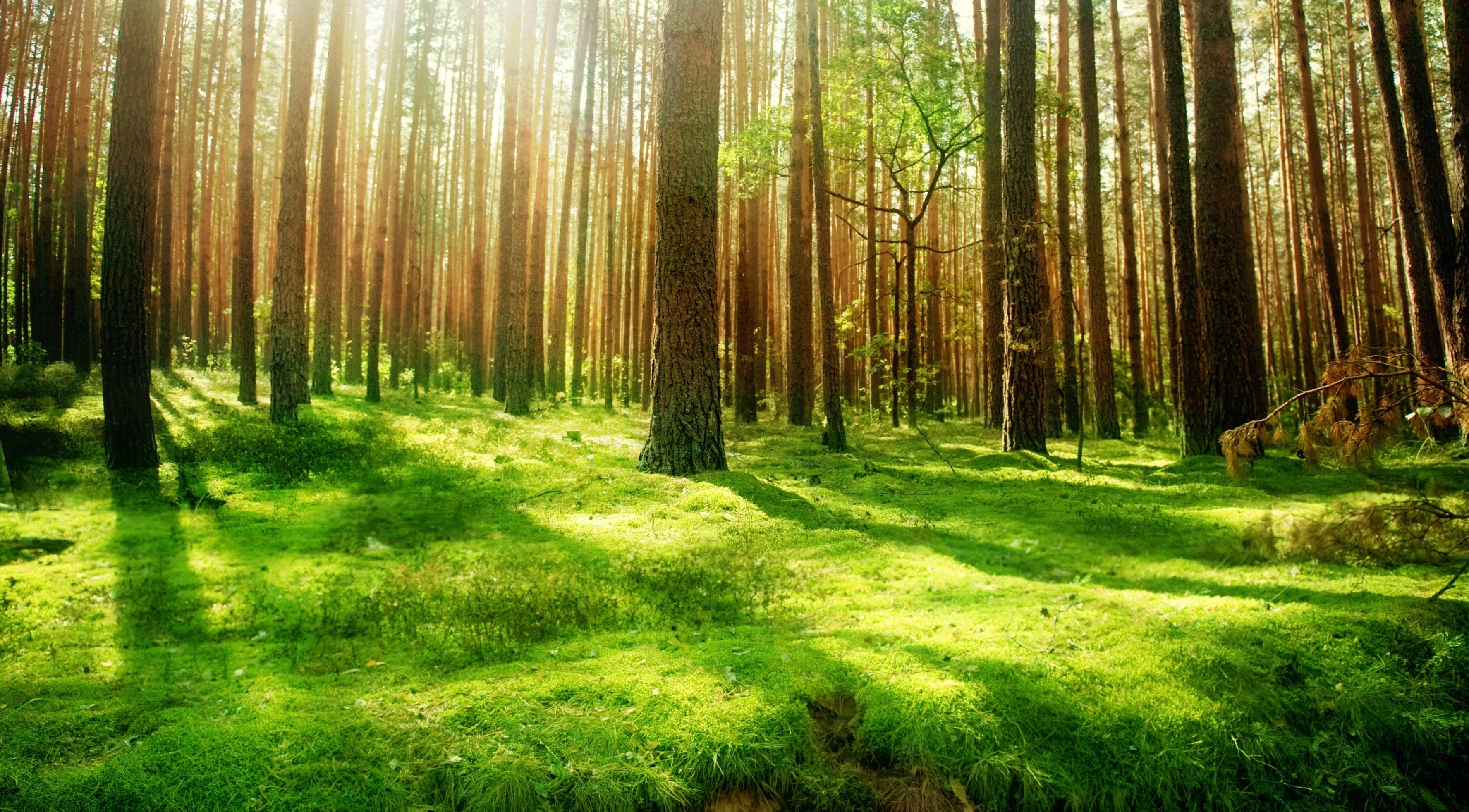 beautiful_forest_scenery-wallpaper-3554x1999
