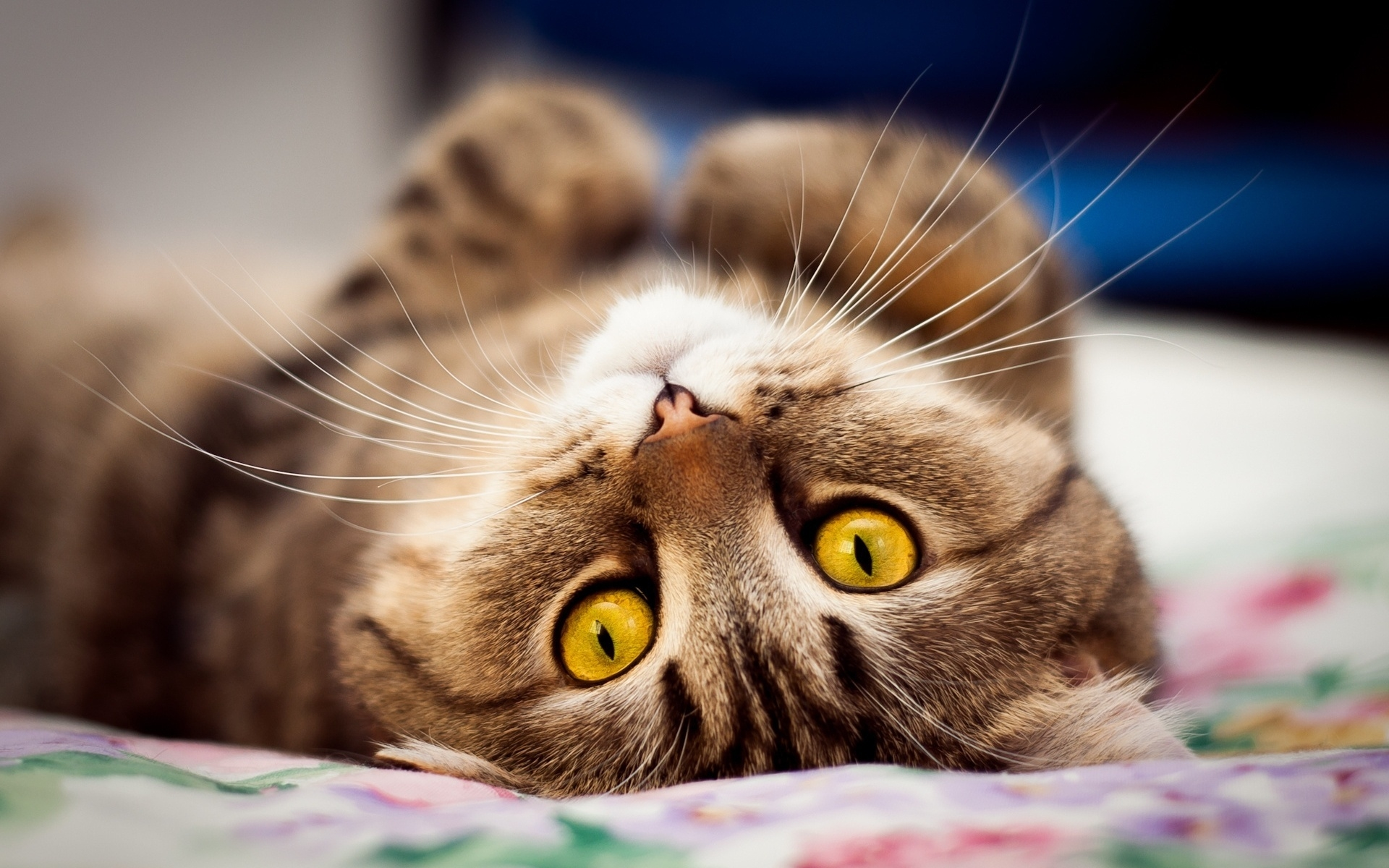 Cat, Whiskers, Eyes 1920x1200 wallpaper | HD Wallpapers