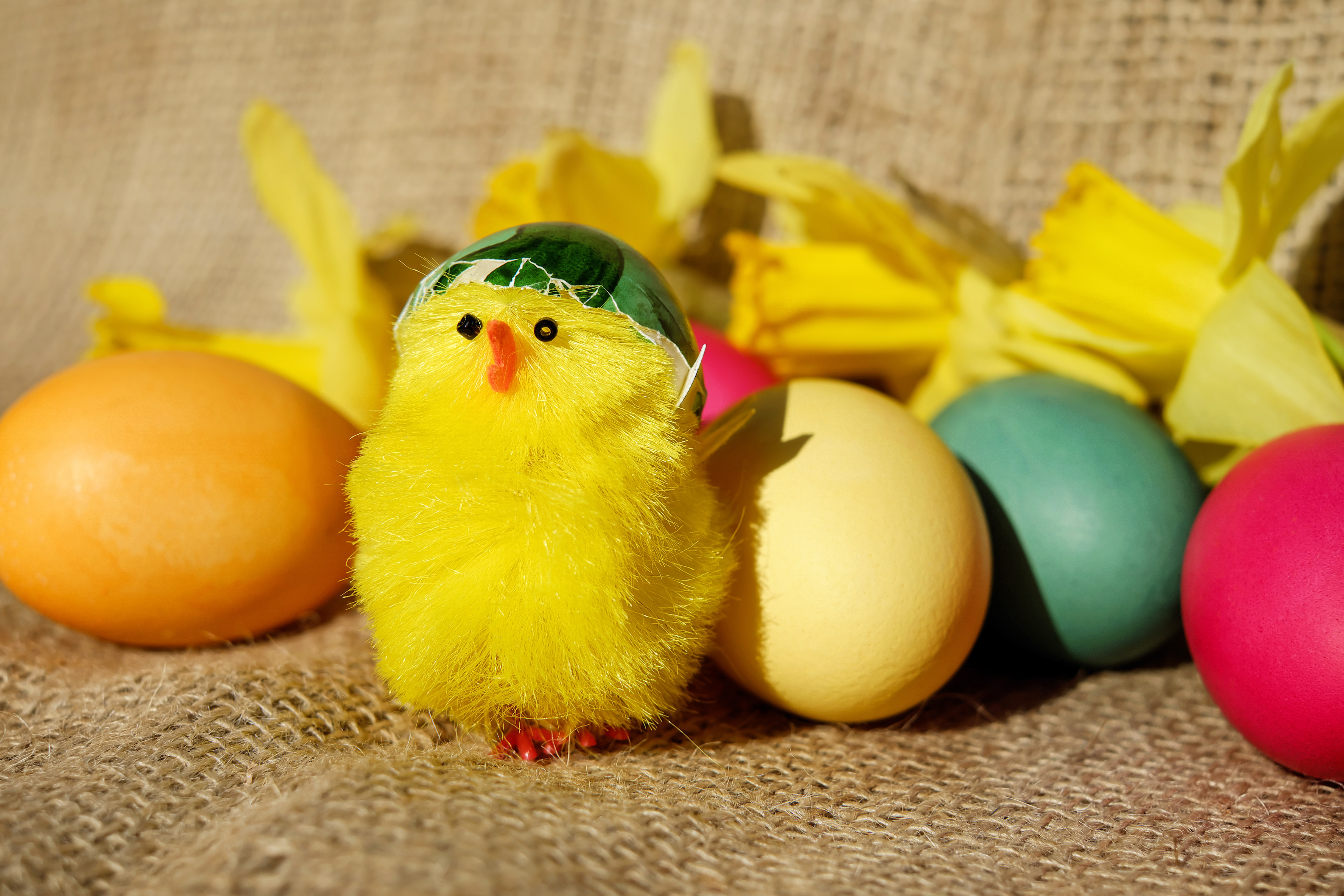 Chick Eggs Easter