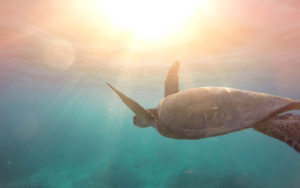 Turtle Underwater 4K Wallpapers
