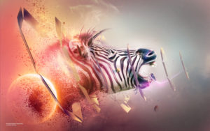 Zebra Transition Wallpapers