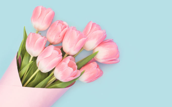Baby Pink Tulips Wallpapers
