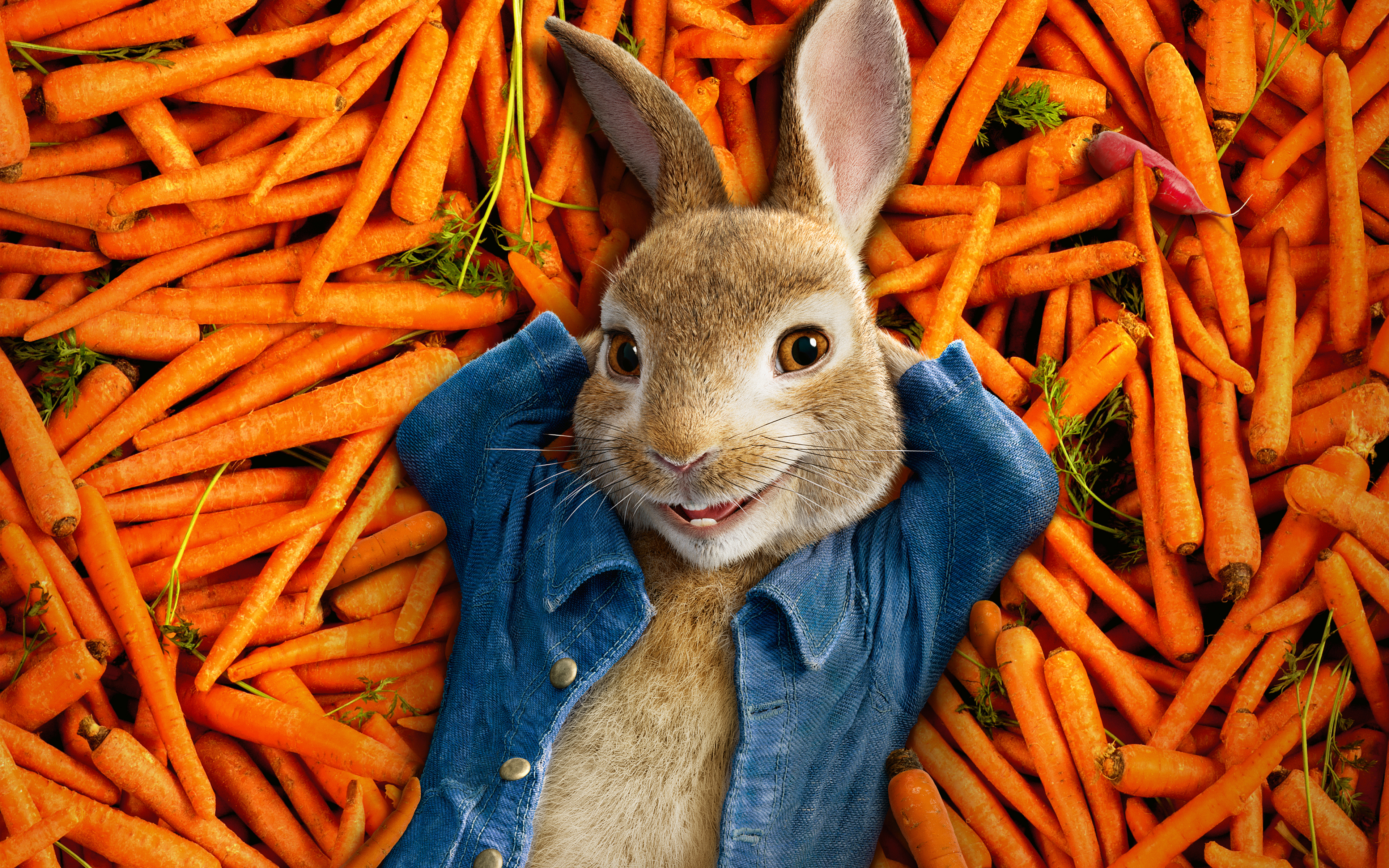 Peter Rabbit 2018 Animation 4k Wallpapers Hd Wallpapers