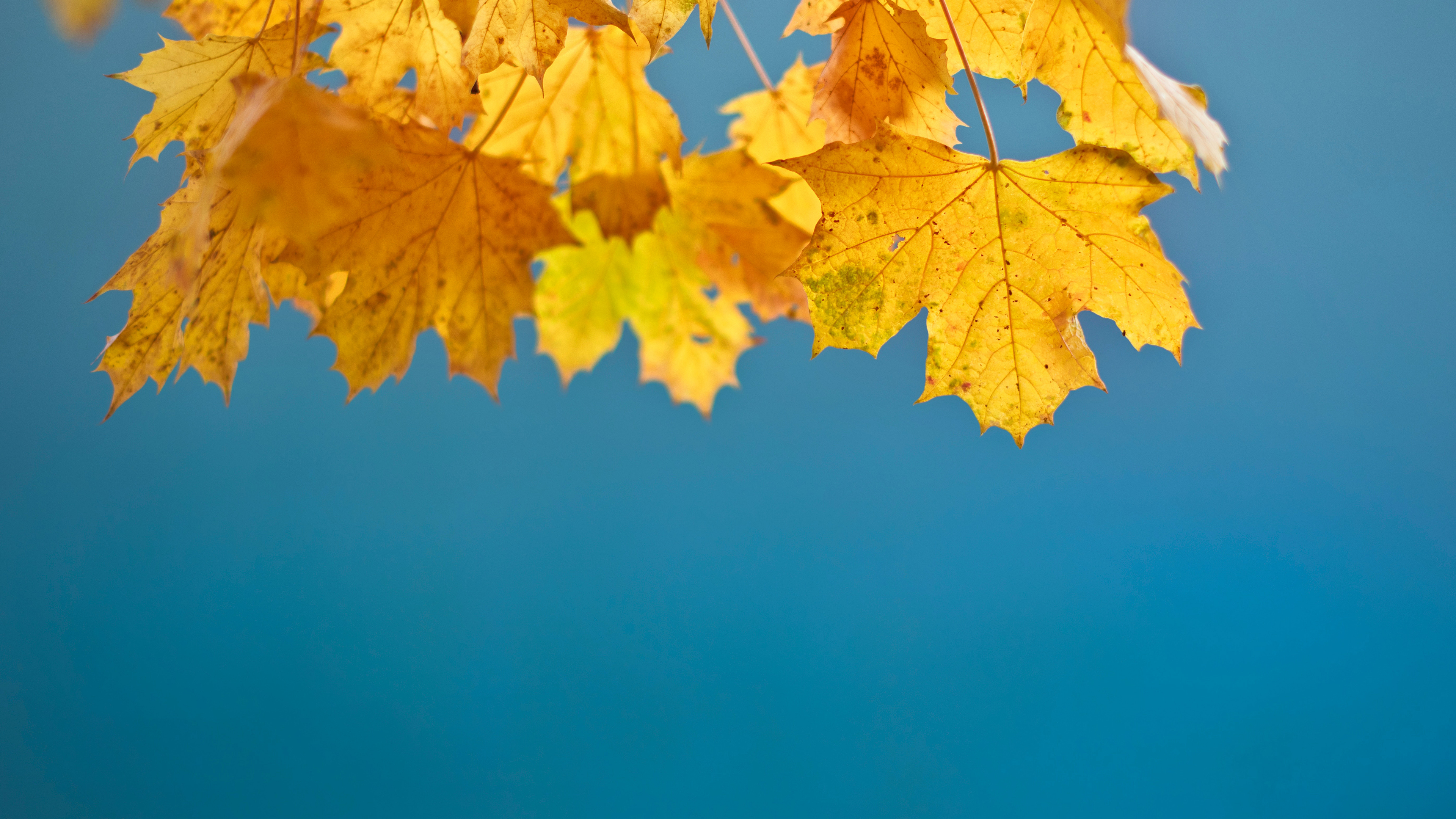 Autumn Leaves 4K Wallpapers