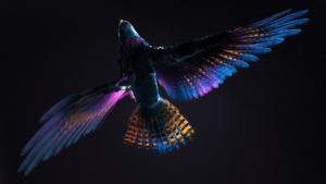 Colorful CGI Bird
