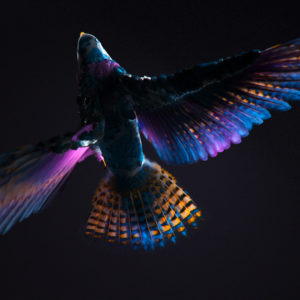 Colorful CGI Bird Wallpapers
