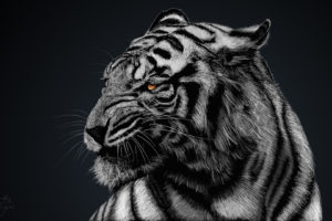 Tiger Artwork HD