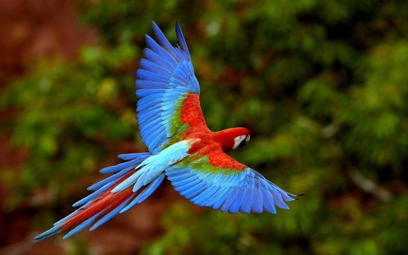 Most Beautiful Birds Wallpapers Hd Wallpapers