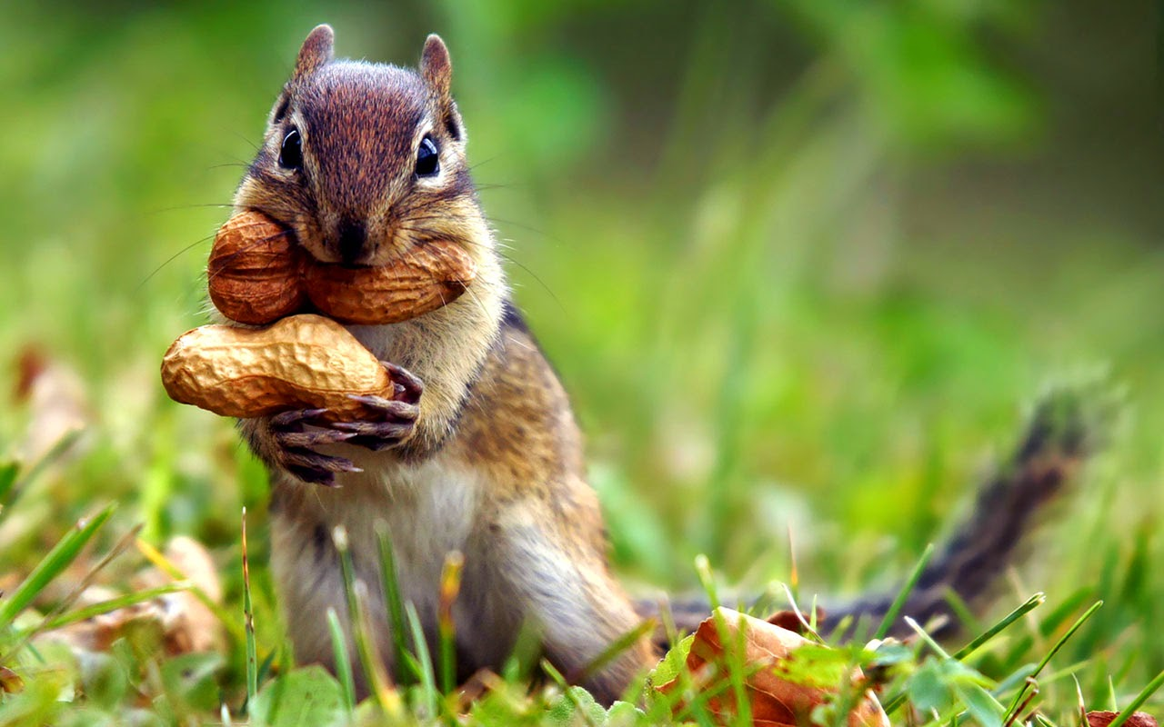 wonderful animals top 10 wallpapers | hd wallpapers