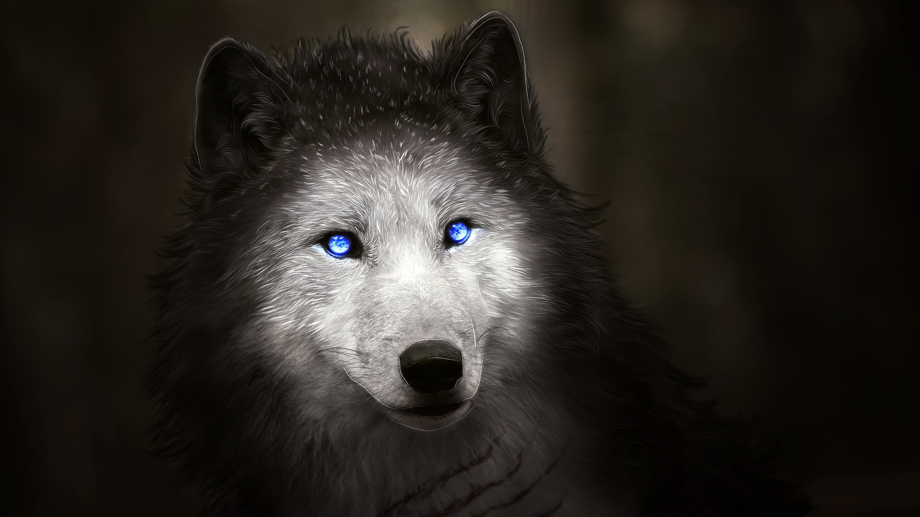 wolf with blue eyes wallpapers hd wallpapers