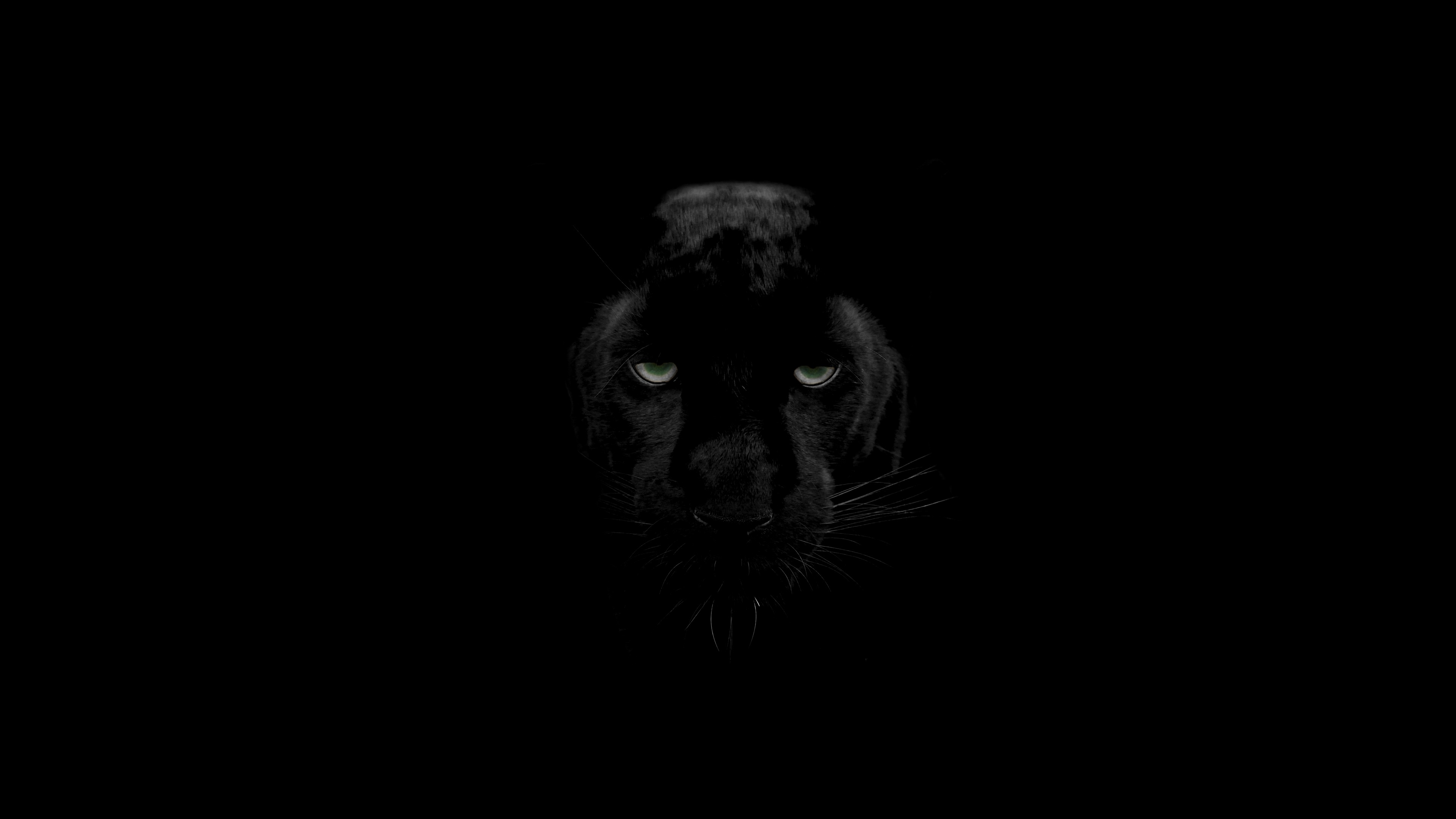 Black Panther Animal Hd Wallpaper For Android Best Funny