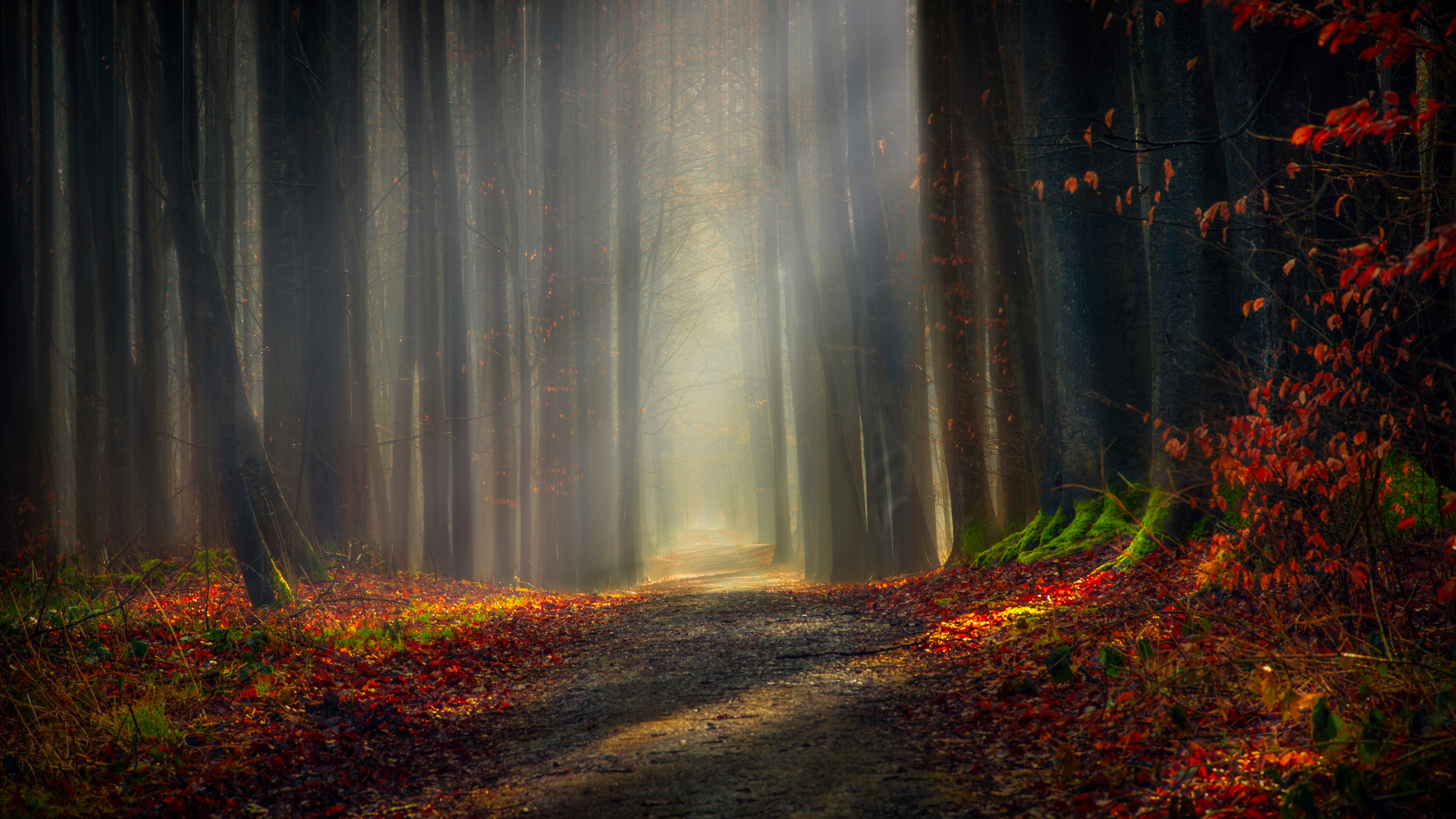 Autumn Forest 5k Wallpapers Hd Wallpapers