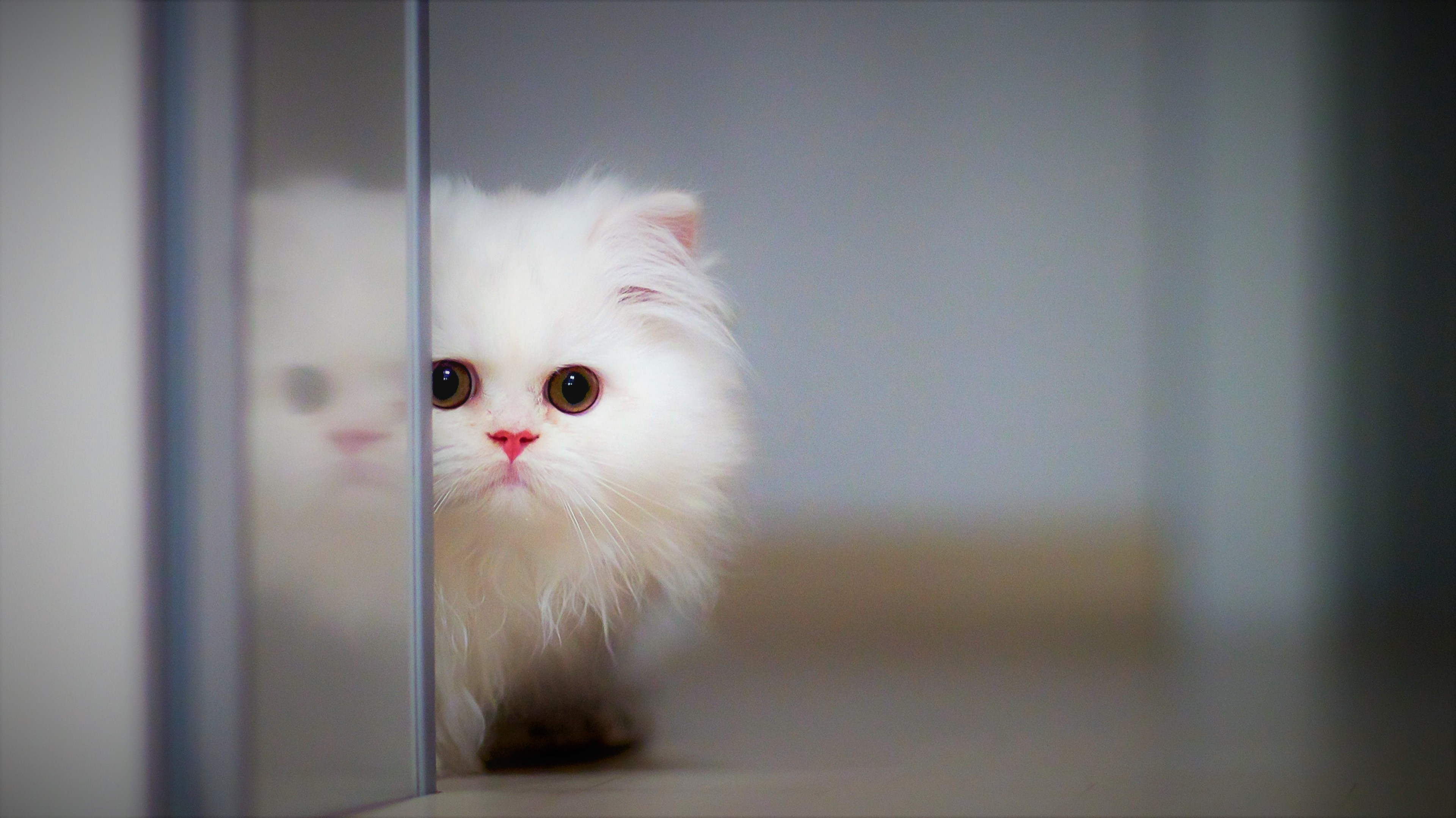 Cute Cat 4k Wallpapers Hd Wallpapers