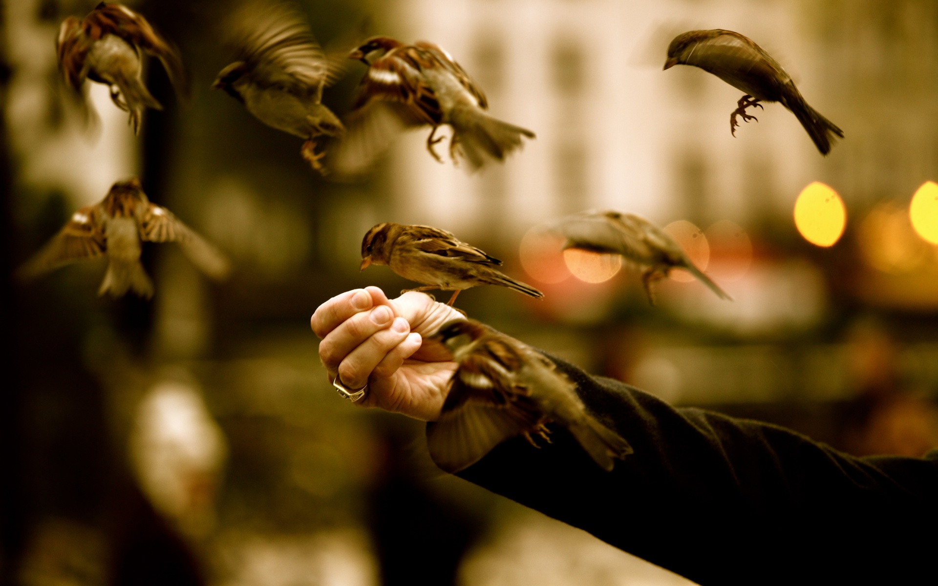Little Sparrow Birds Flying On Arm Hd Wallpapers