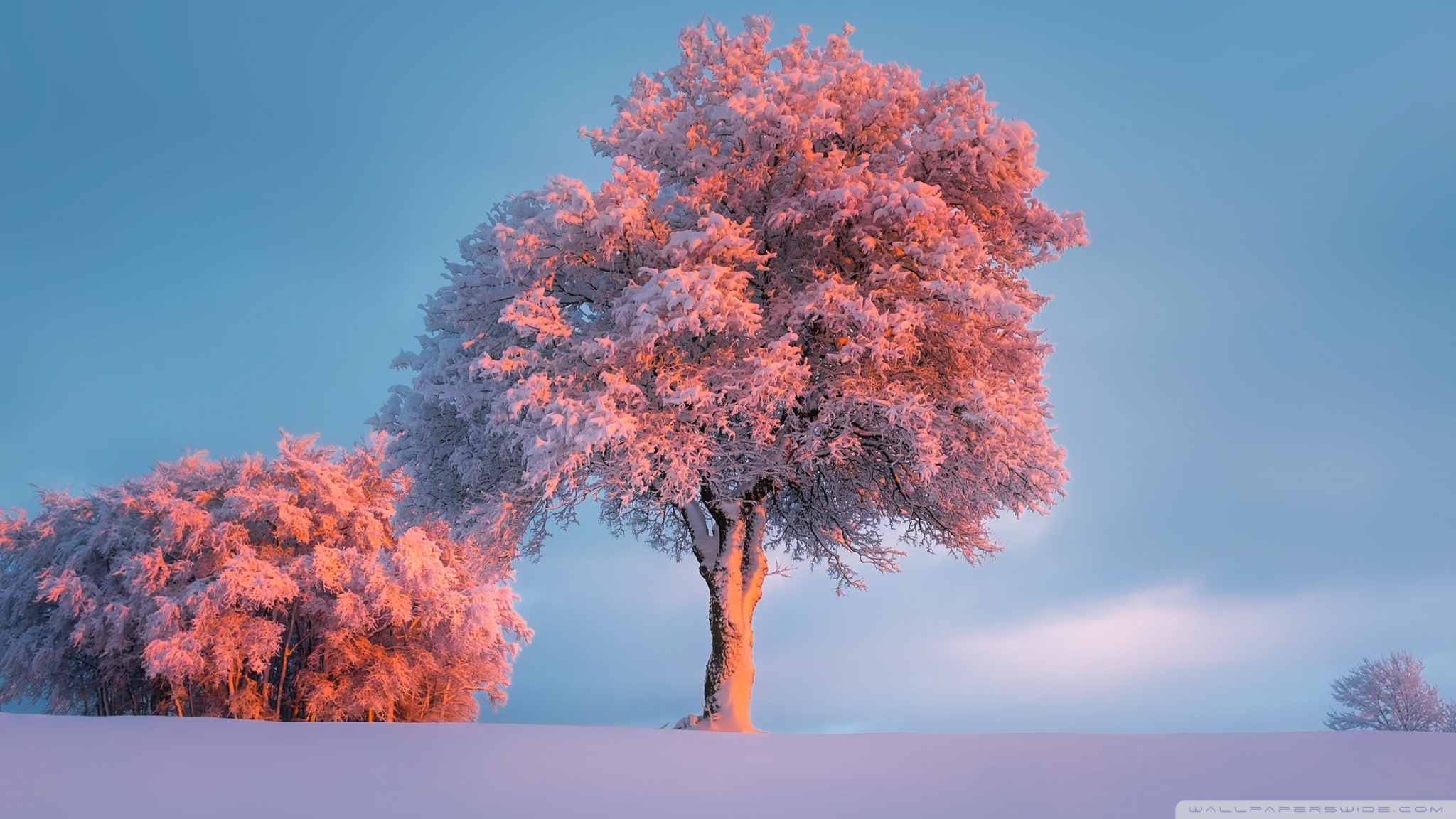 Trees Winter Pink Sunset Hd Wallpapers
