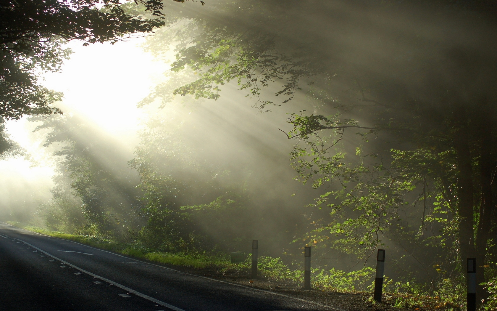 Sun, Beams, Morning, Road, Branches, Tree, Marking