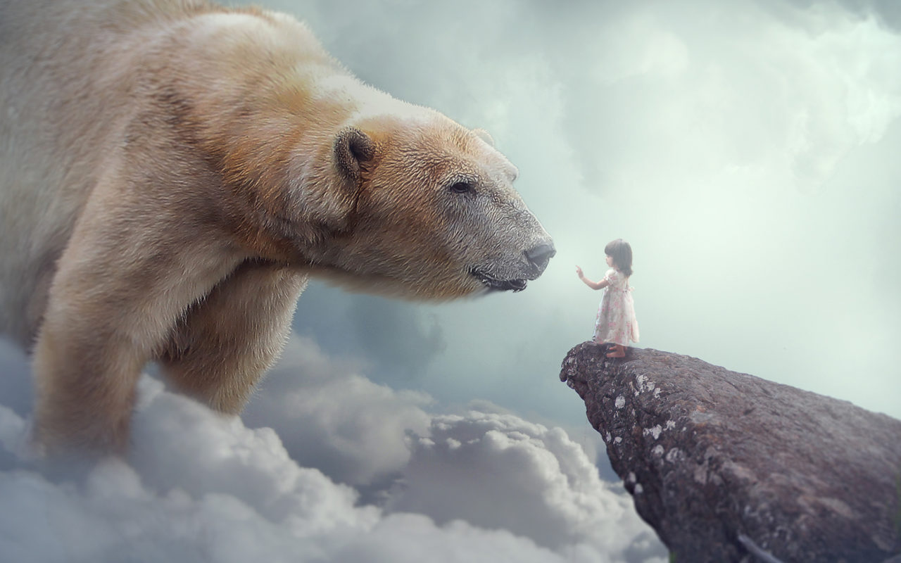 Polar Bear Child Dream Wallpapers Hd Wallpapers