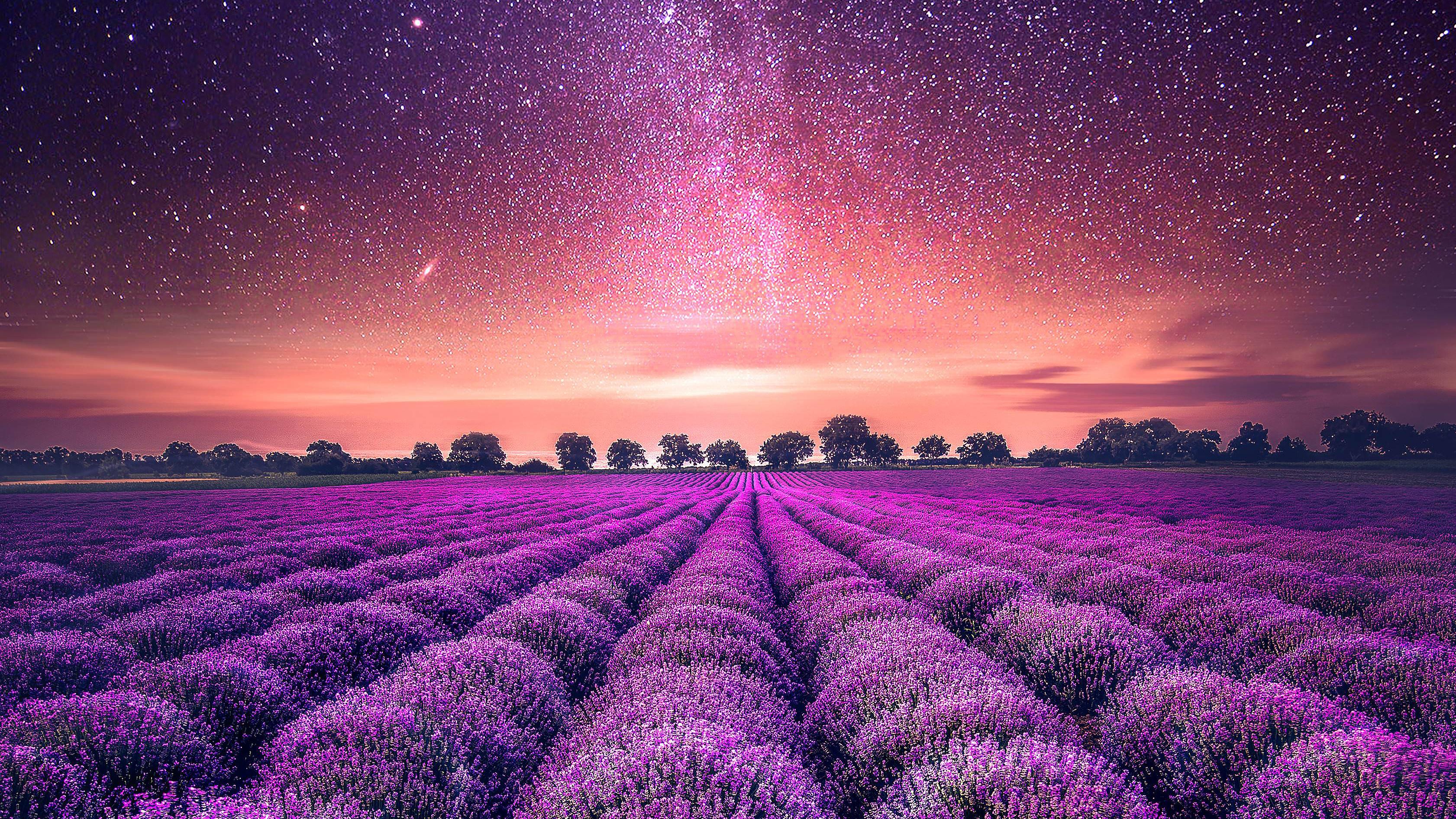 Starry Sky Lavender field Wallpapers | HD Wallpapers