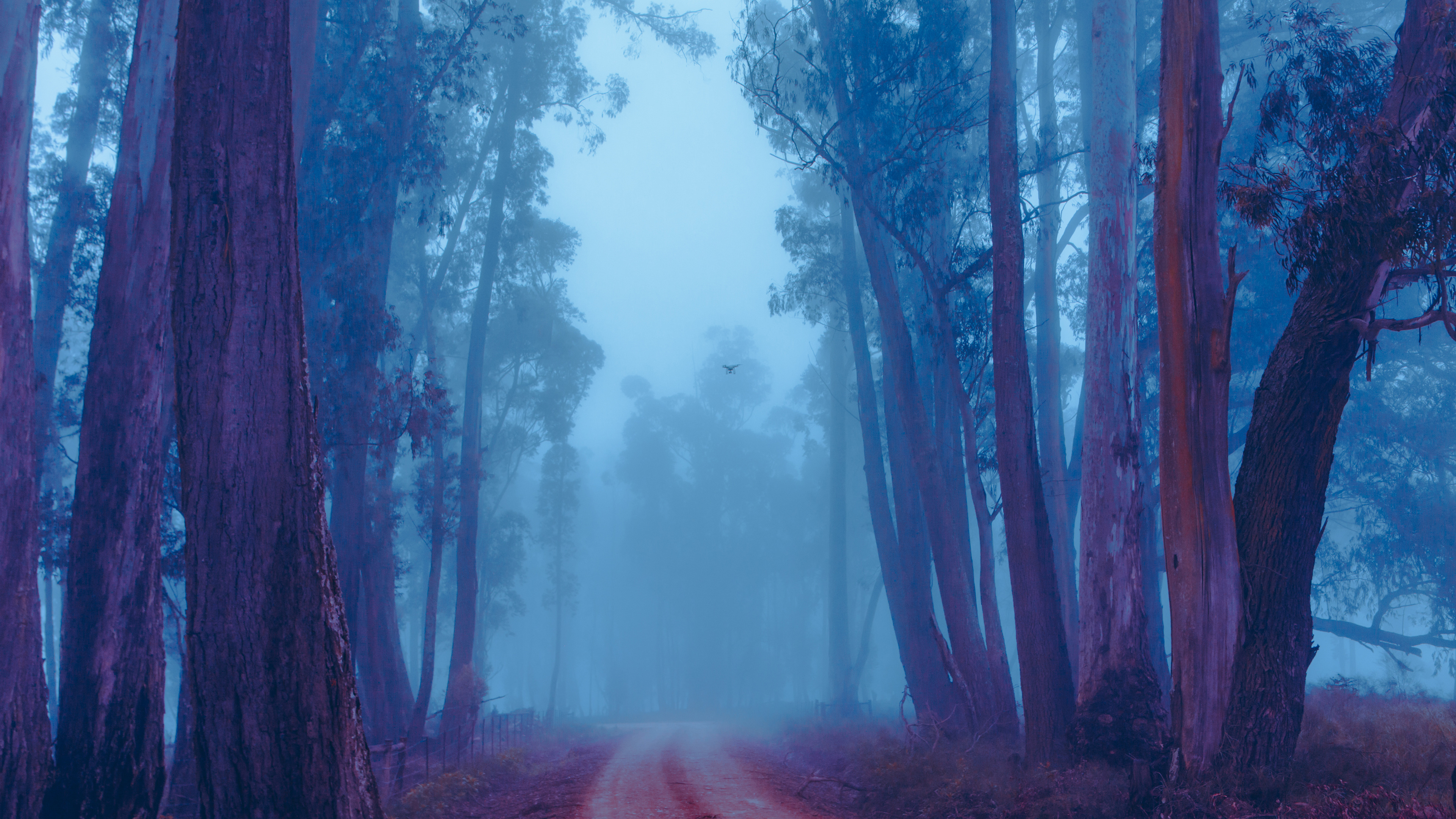 Foggy Forest 4K Wallpapers   HD Wallpapers