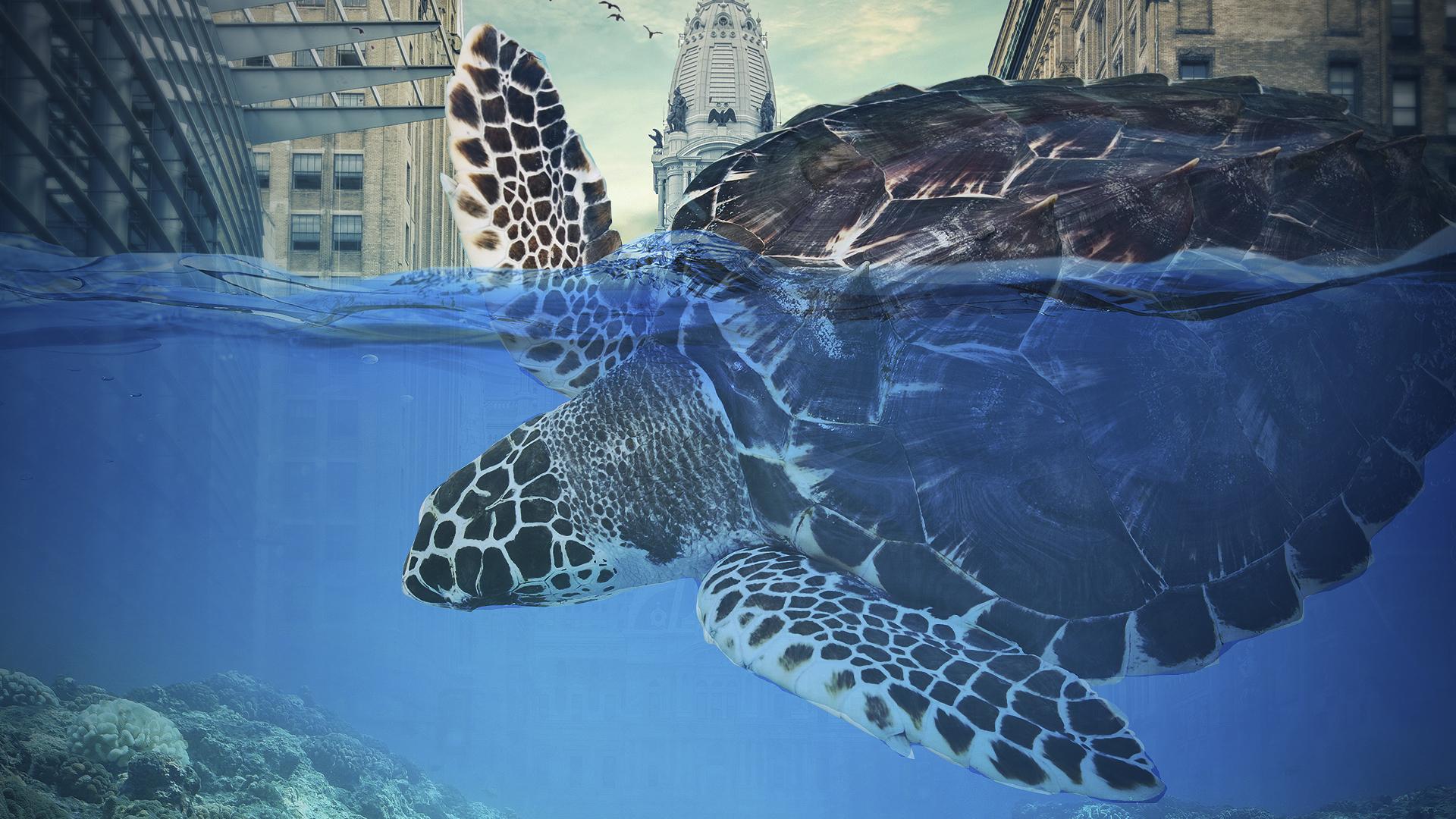Gaint Turtle Wallpapers Hd Wallpapers