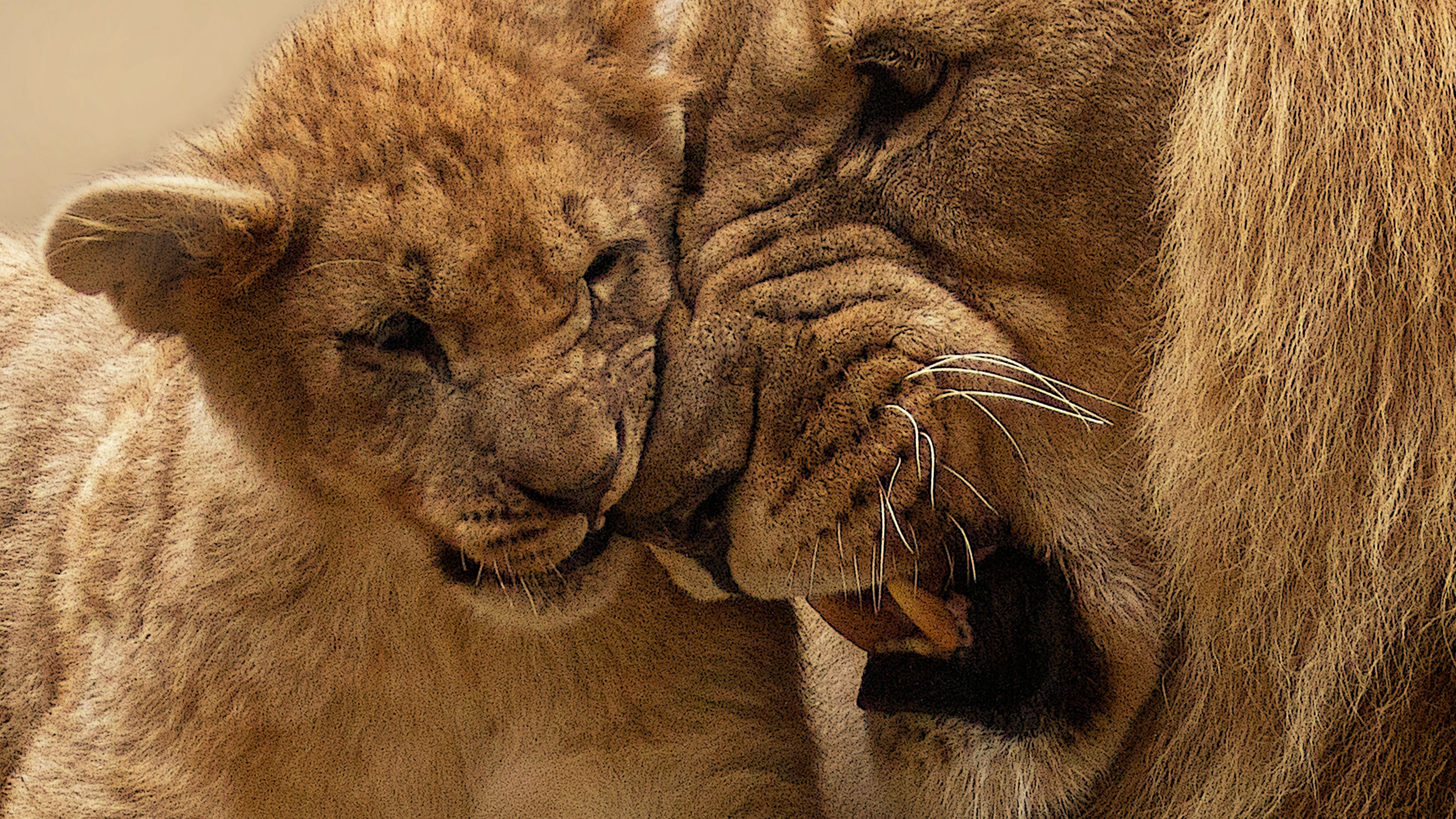 African Lion And Cub 4k Wallpapers Hd Wallpapers